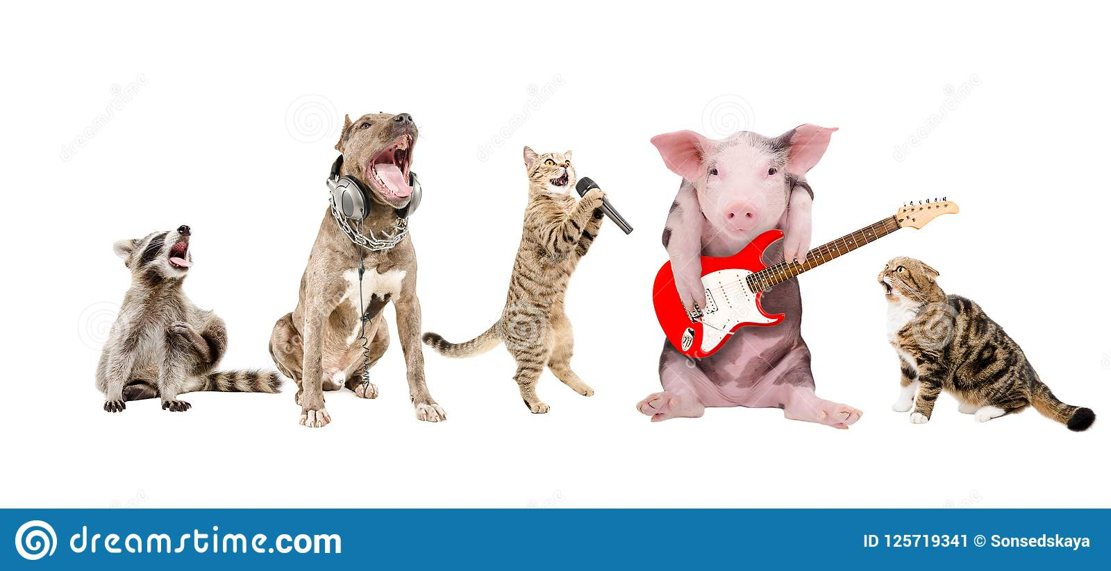 Group of cute funny animals musicians