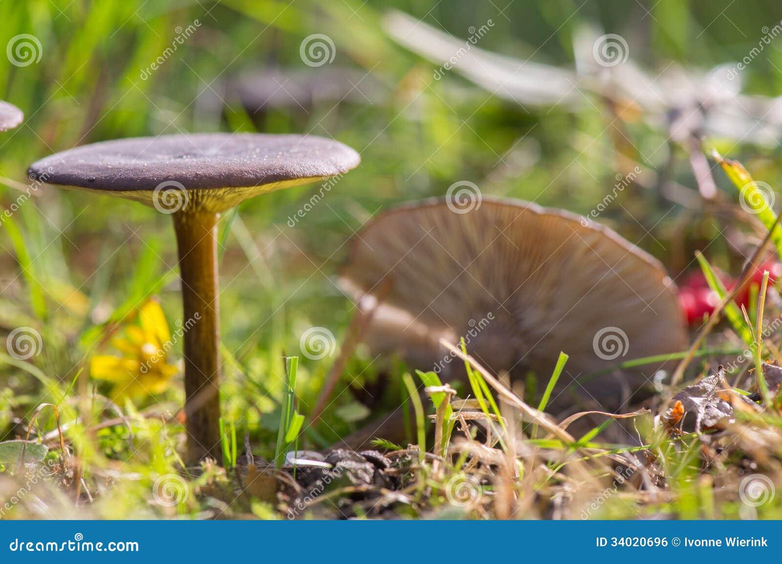 Group dark mushrooms