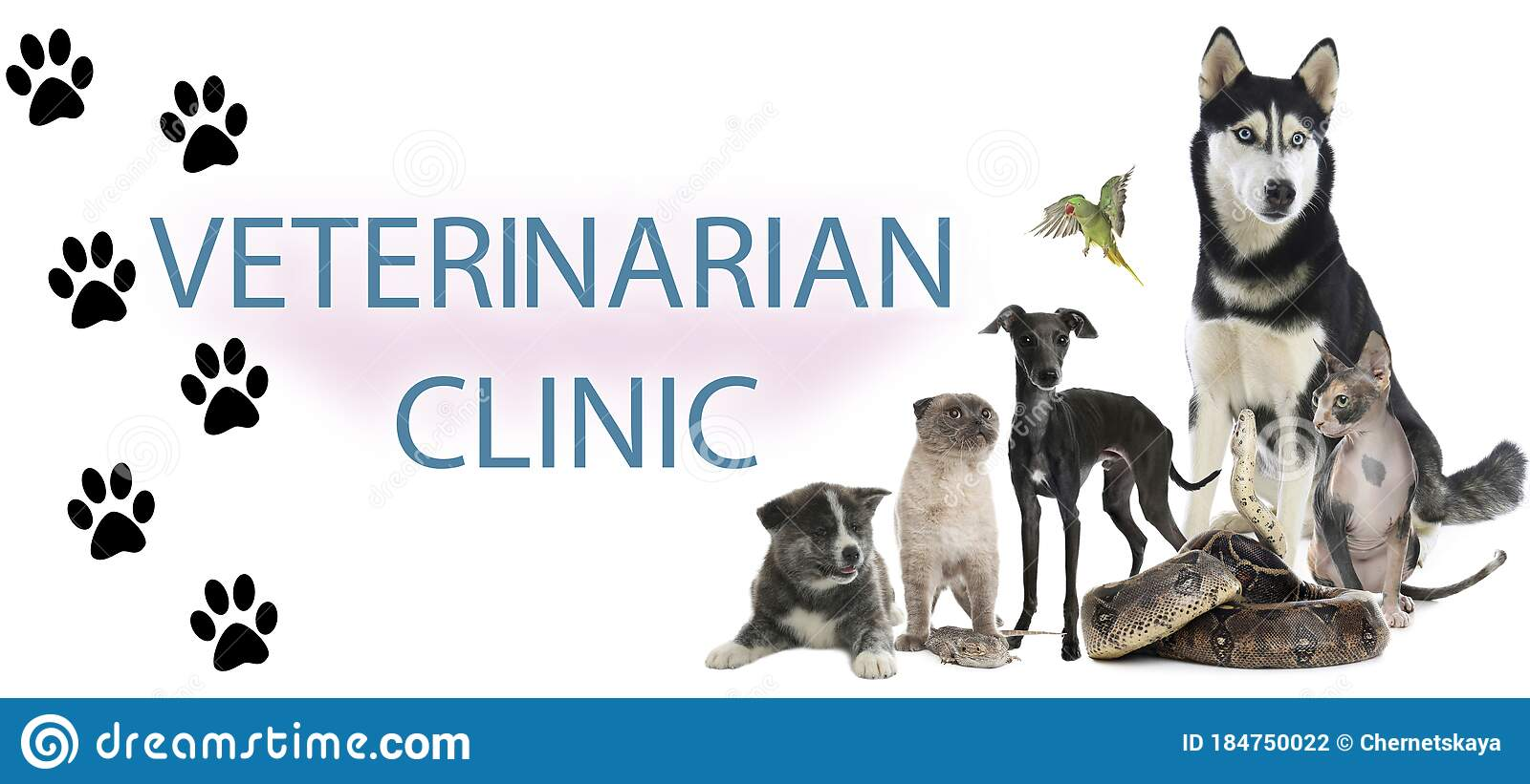 Group Of Cute Pets And Text Veterinarian Clinic On White Background Banner Design Stock Photo Image Of Collection Concept 184750022