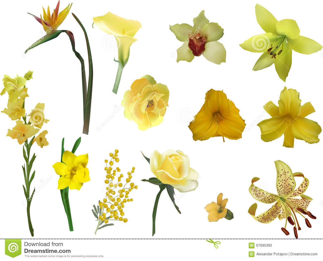 Group Different Yellow Flowers Isolated White Stock Illustrations