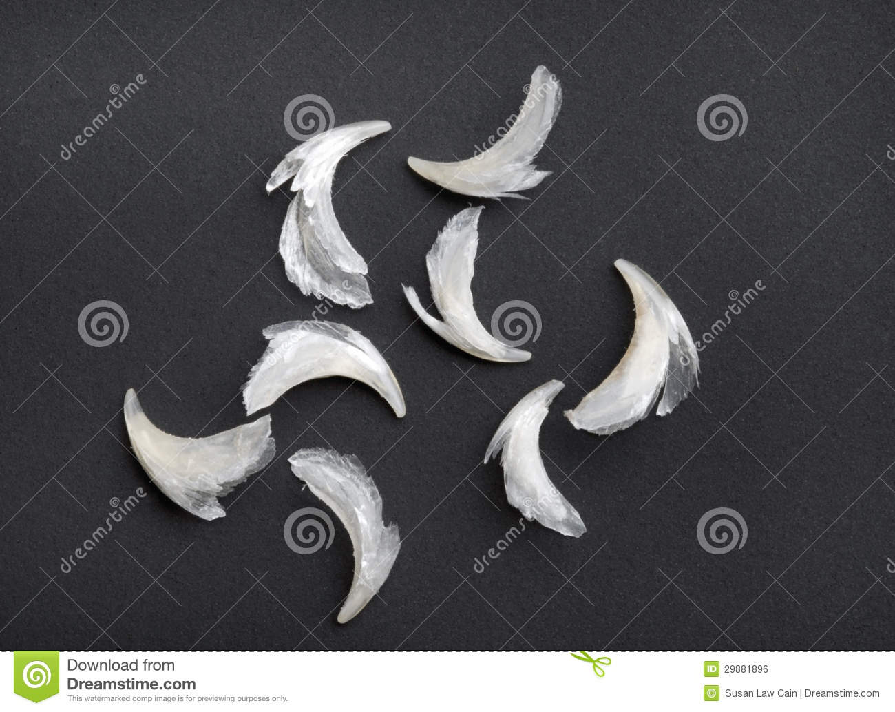 Group Of Cat Claws Royalty Free Stock Image Image 29881896