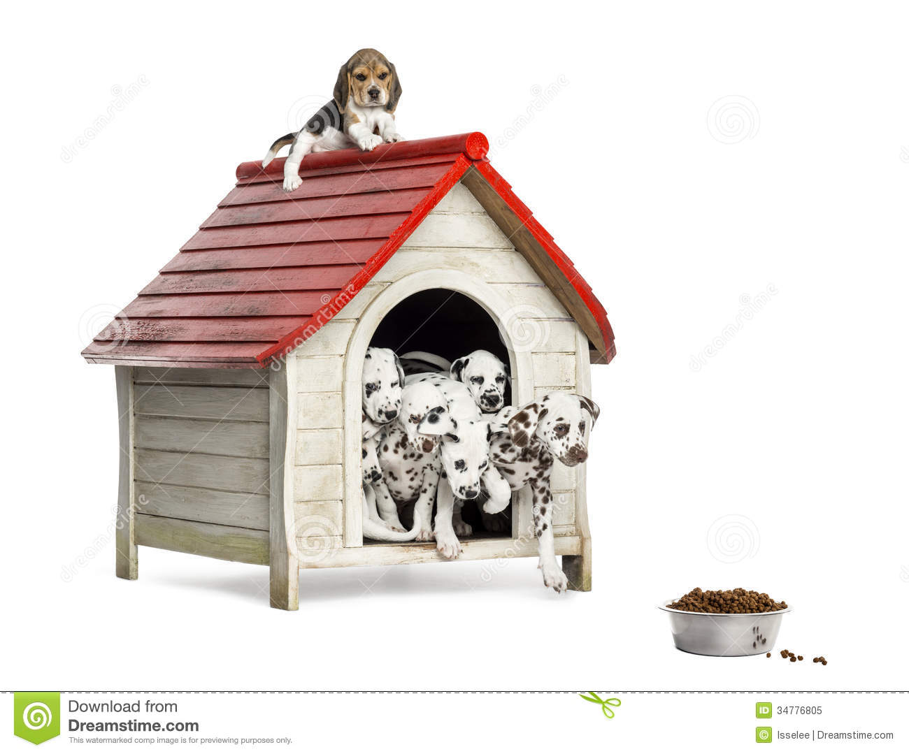 Cute Kennels For Dogs