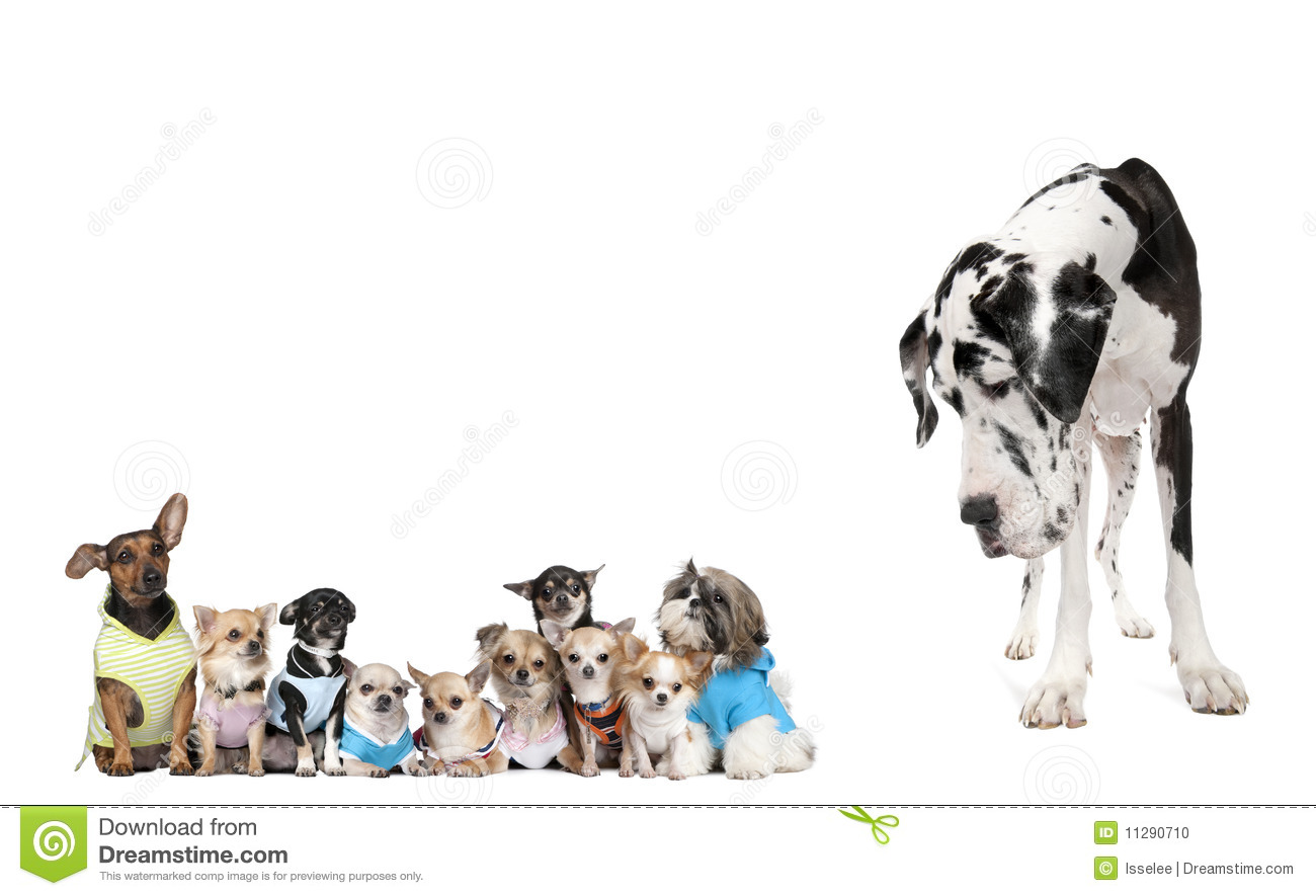 Group Of Dogs Against White Background Stock Photo - Image: 11290710