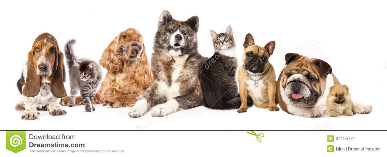 Group of dogs and cat royalty free stock photography Can a dog tell if another dog is sick