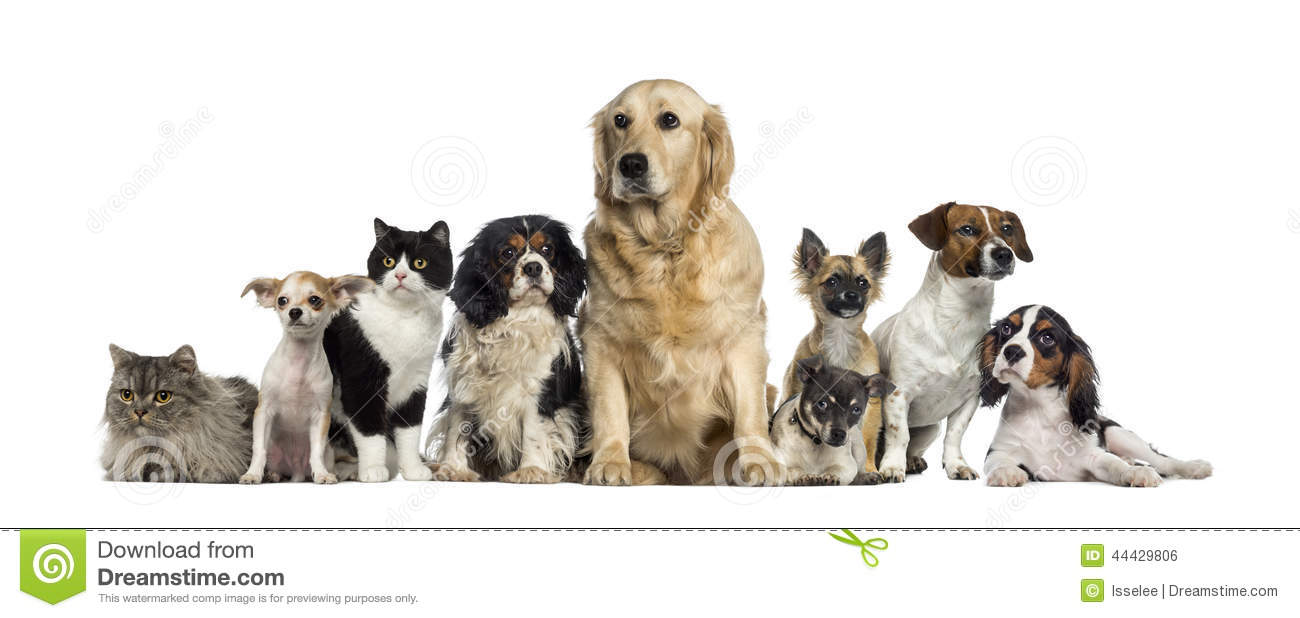Group of dogs and cats - photo#12