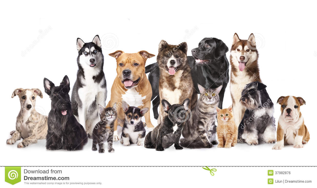 Group Of Dogs And Cats Stock Photo Image Of Canine Animals 37982876