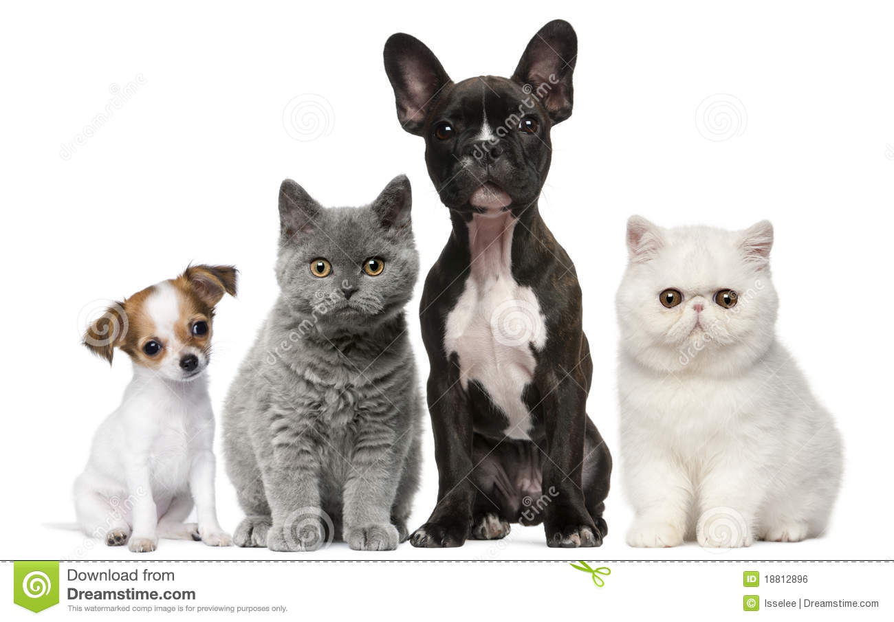 Group of dogs and cats - photo#7