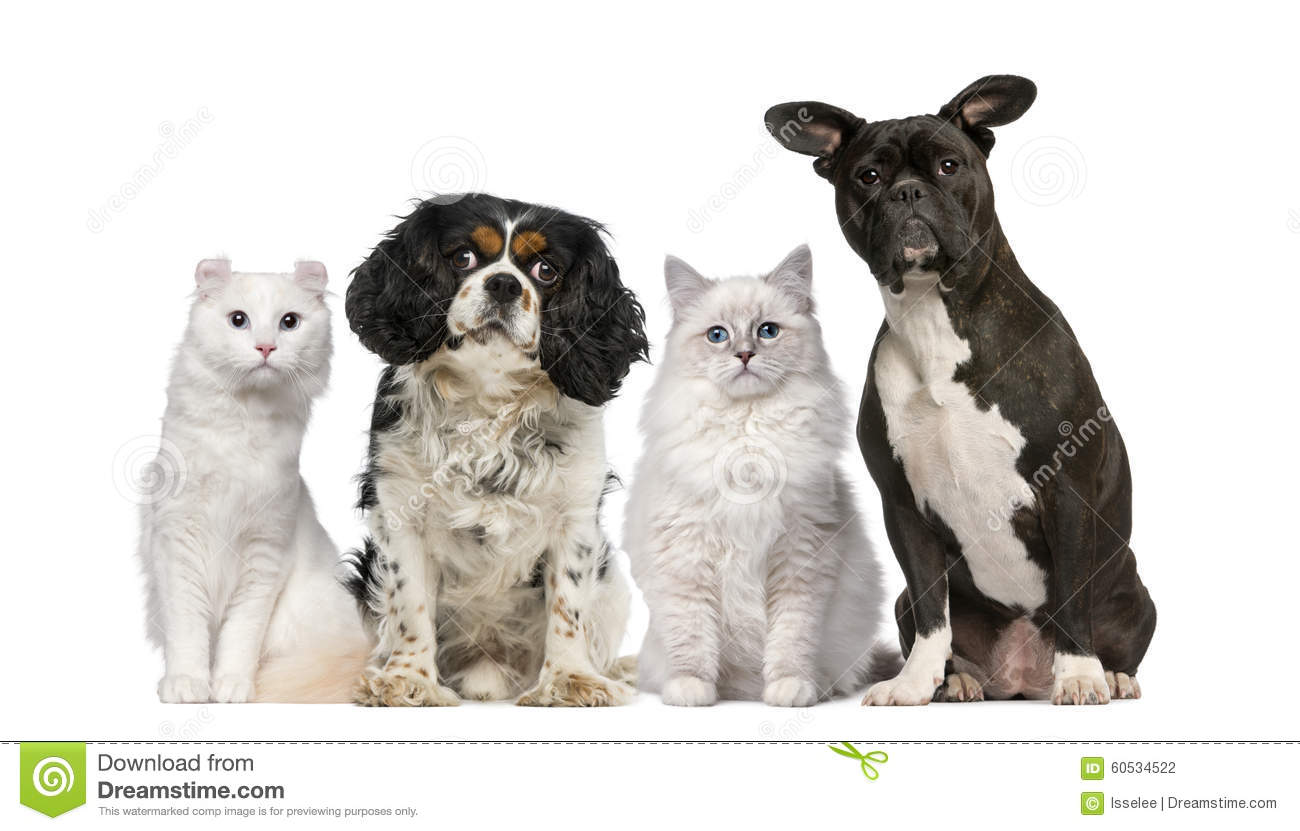 Group of dogs and cats - photo#9