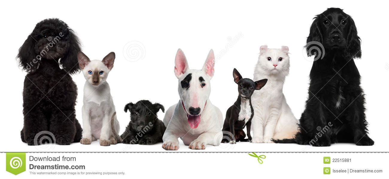 Group of dogs and cats - photo#17