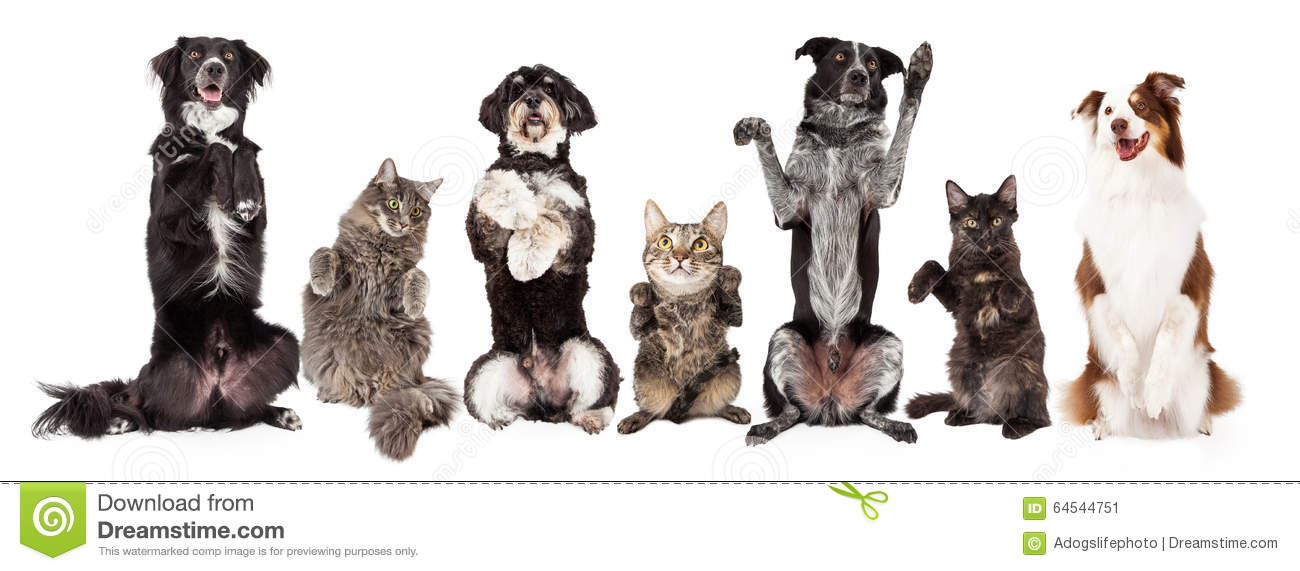 Group Of Dogs And Cats Together Begging Stock Image , Image