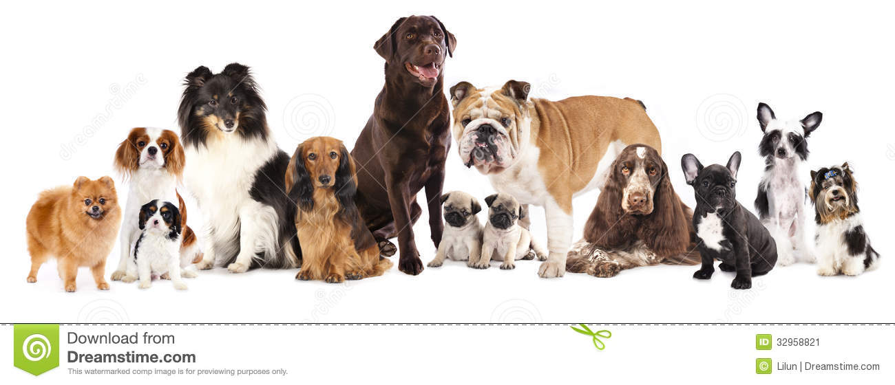 Breed Groups For Dogs