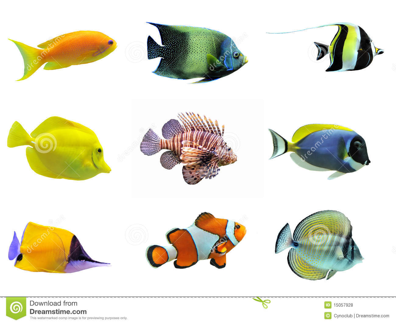 Group Of Fishes Royalty Free Stock Photos - Image: 15057928