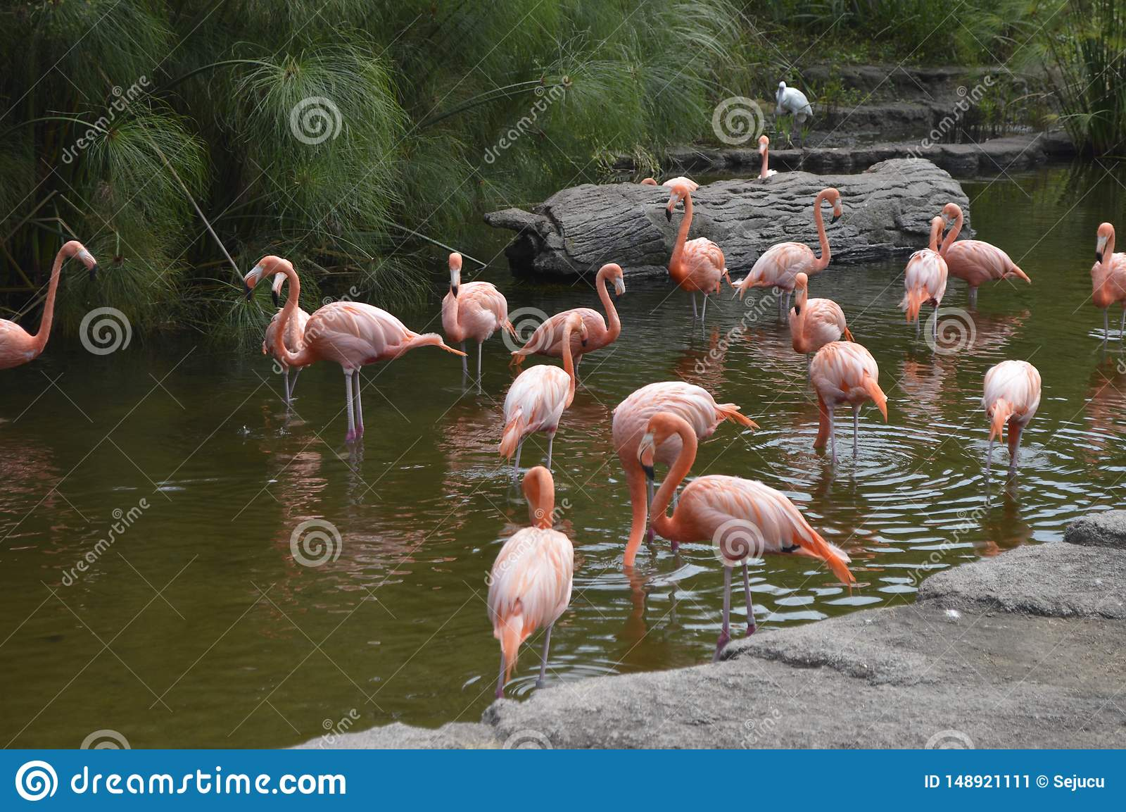 group of flamingos cooling in the lagoon
