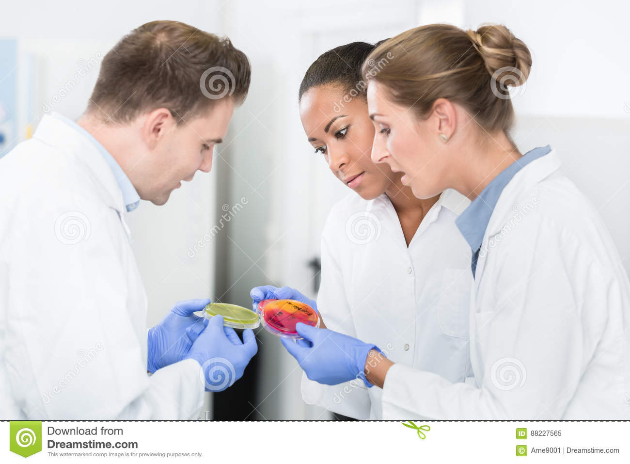 Group of food laboratory researchers comparing bacteria cultures
