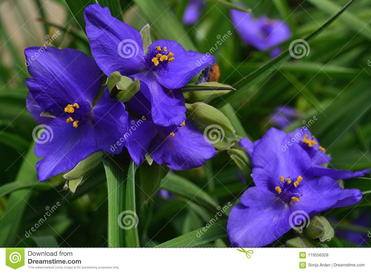 Group Of Fresh Purple Flower In A Green Ambience Stock Photo Image