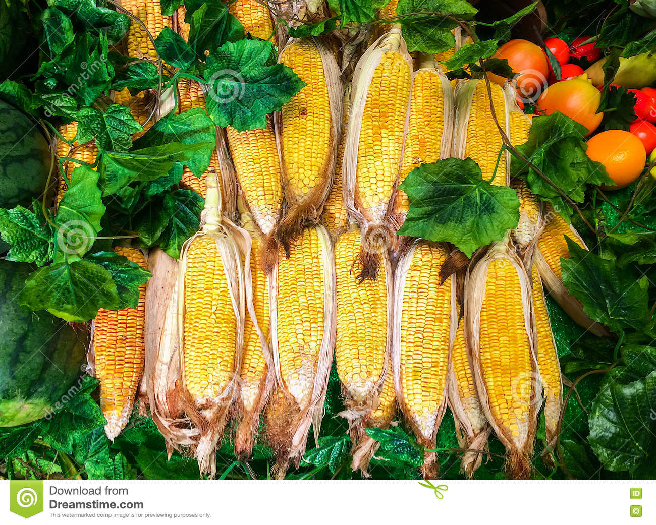 group of fresh sweet corn on cobs in the farm for sale in the market
