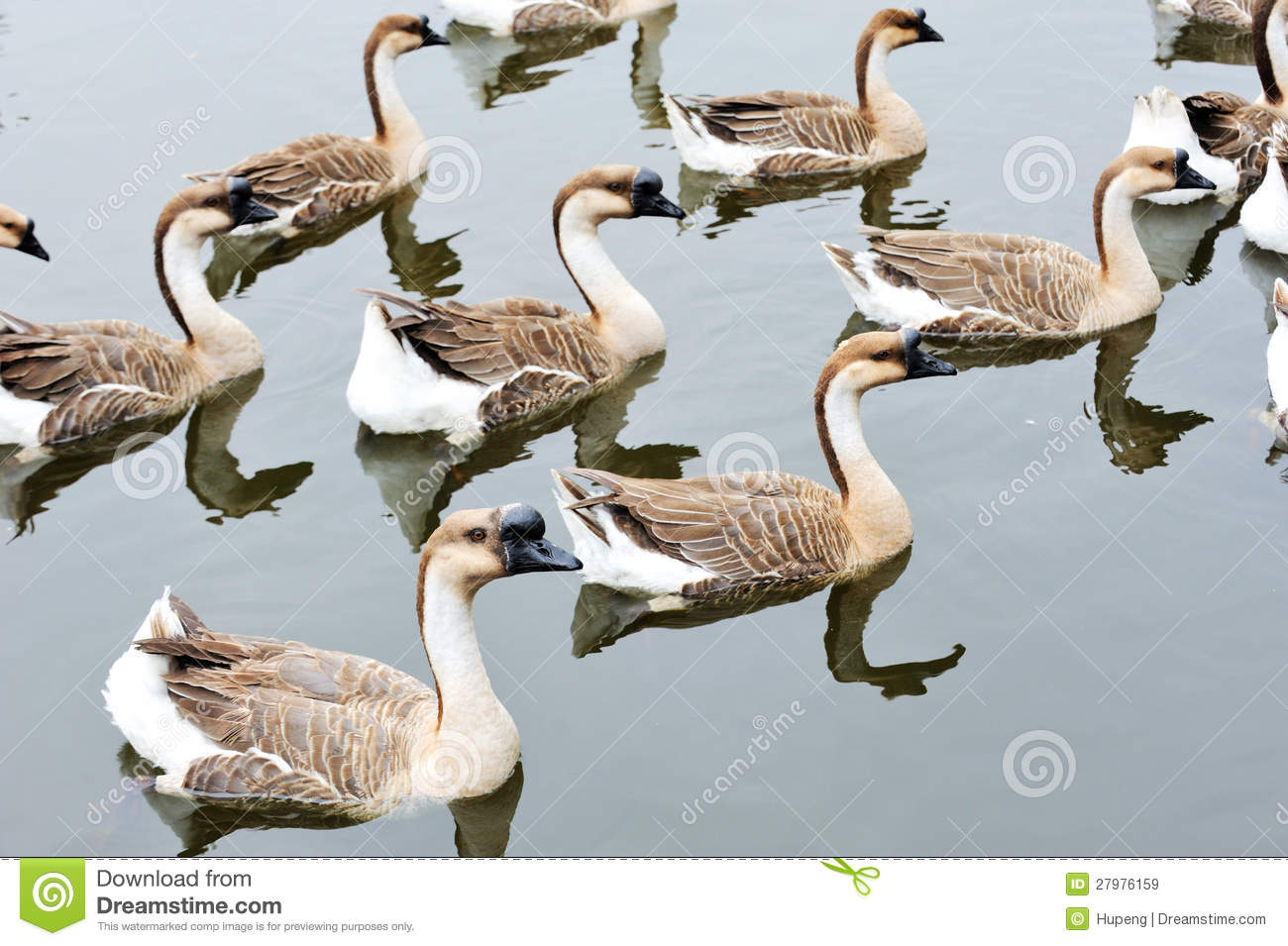 What Is A Group Of Geese Called 54