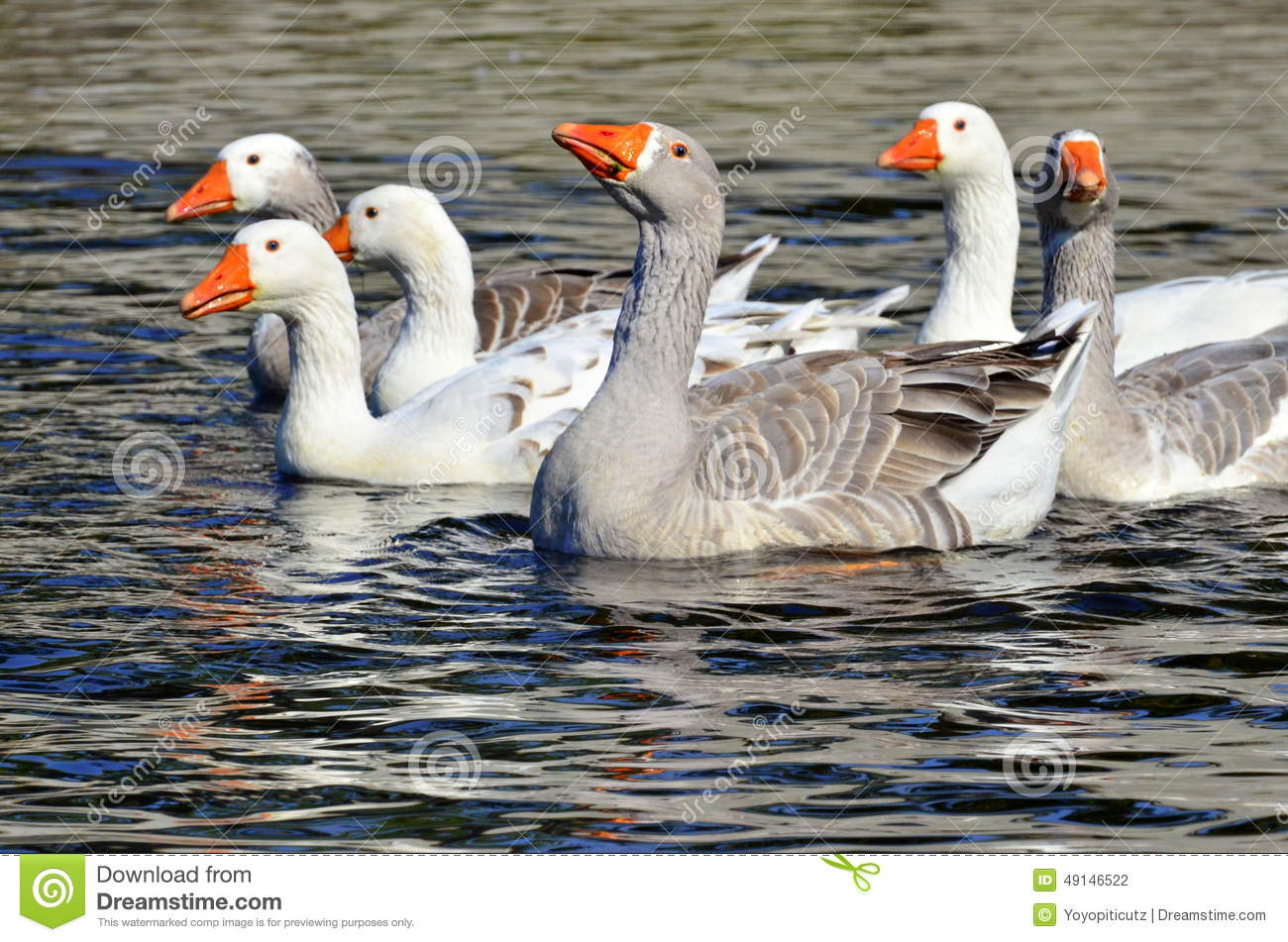 What Is A Group Of Geese Called 40