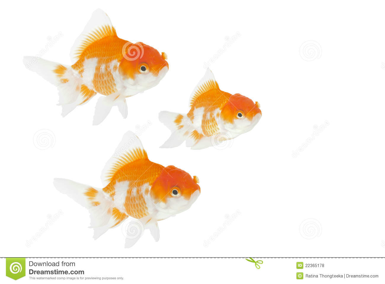 Group of gold fish royalty free stock photos image 22365178 for Fish and pets unlimited