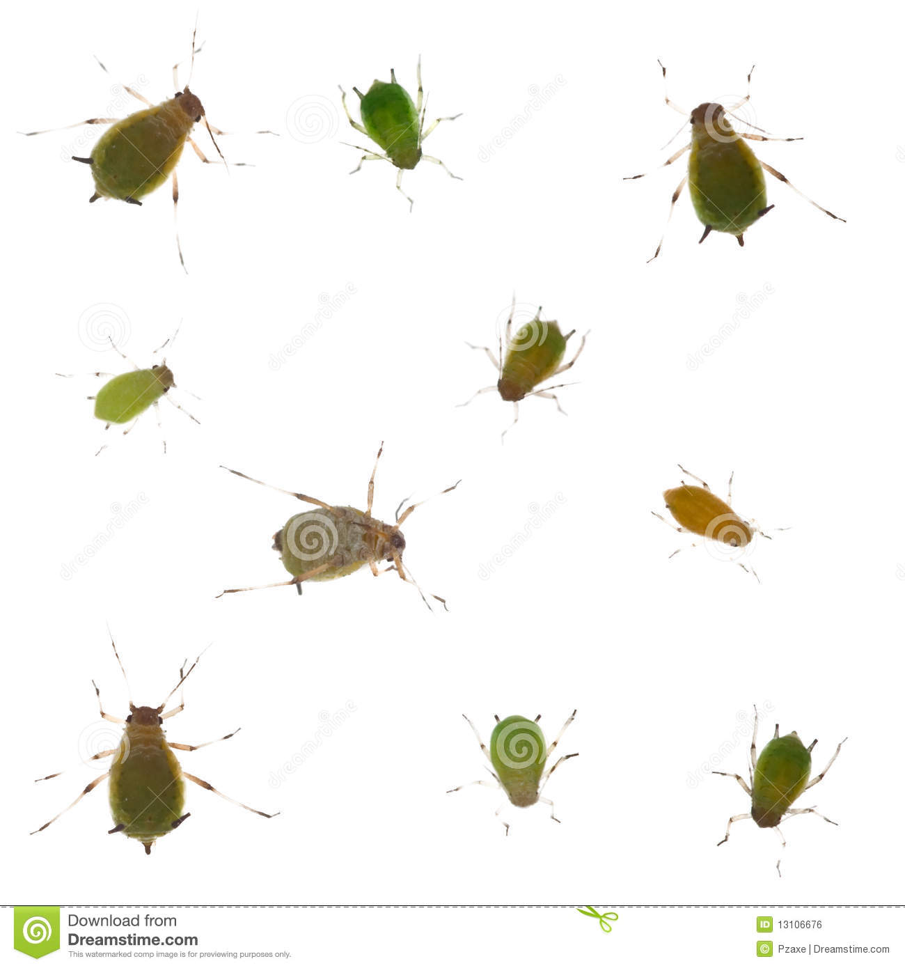 Group Of Green Aphids On White Background Royalty Free Stock Image ...