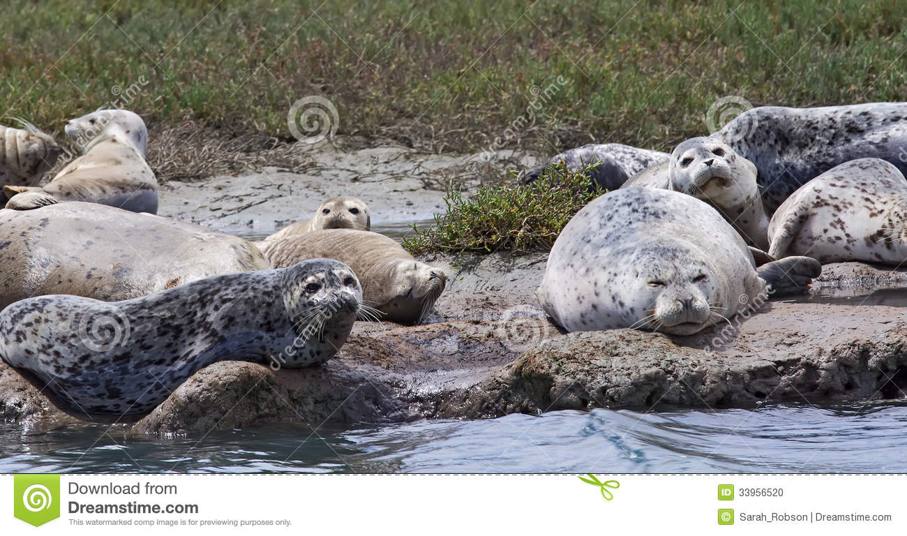 Group Of Seals Is Called 112