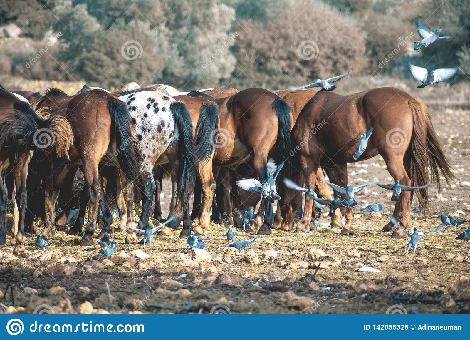 Group of horses in a field with flying pigeons