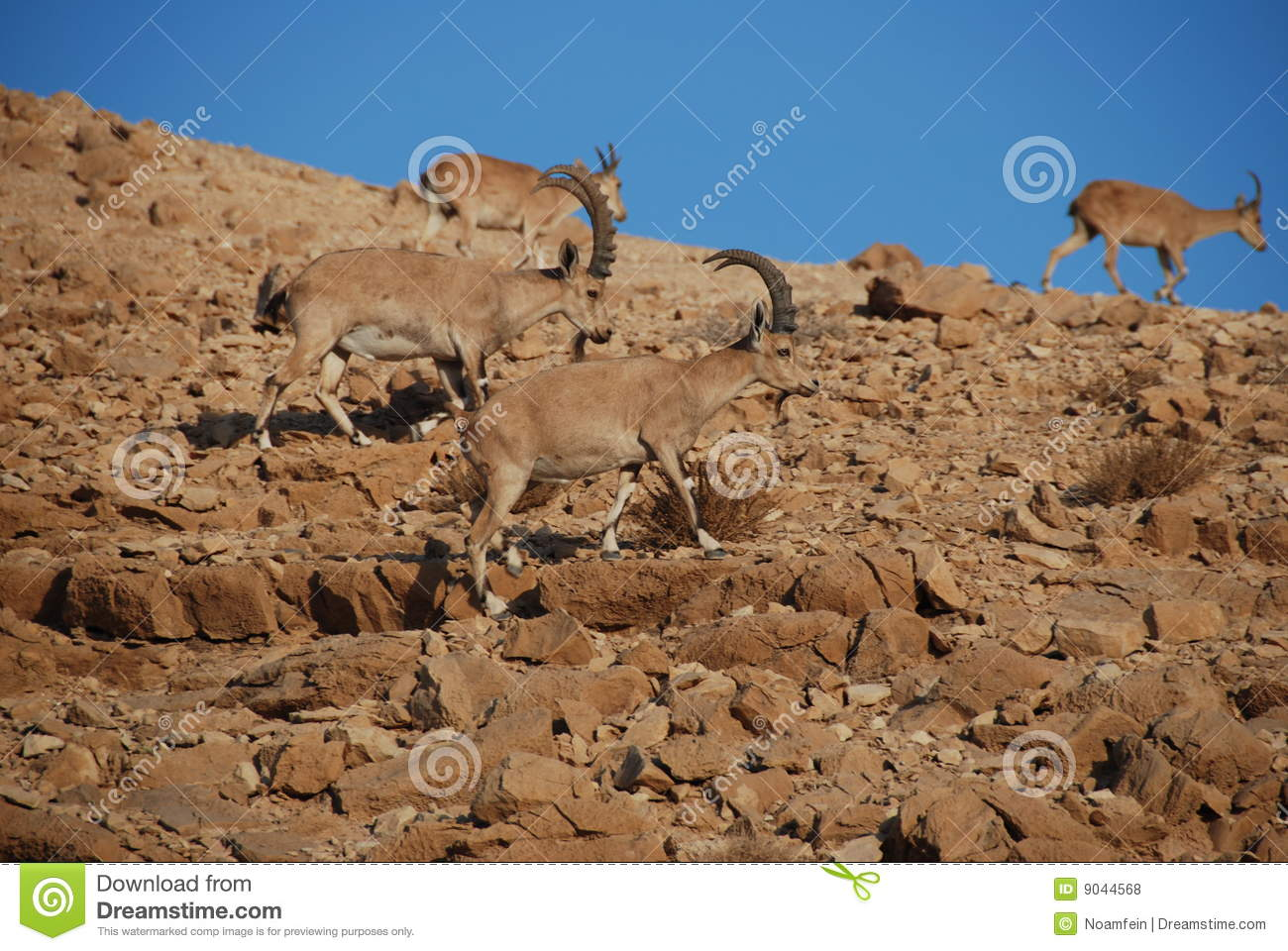 Image Result For Chinese Wildlife Photosa