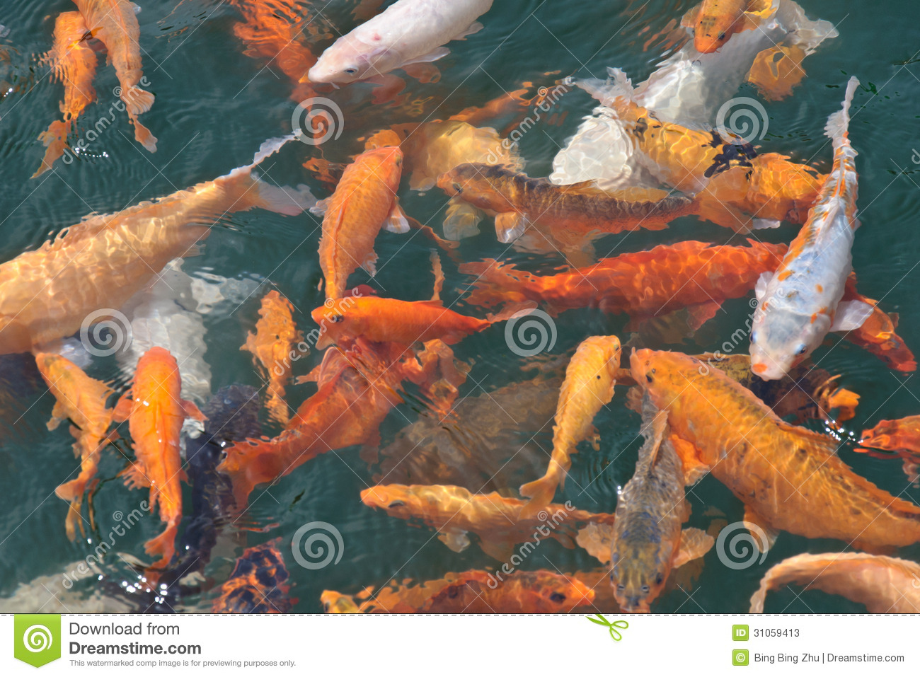 A Group Of Koi Fish Stock Photos Image 31059413