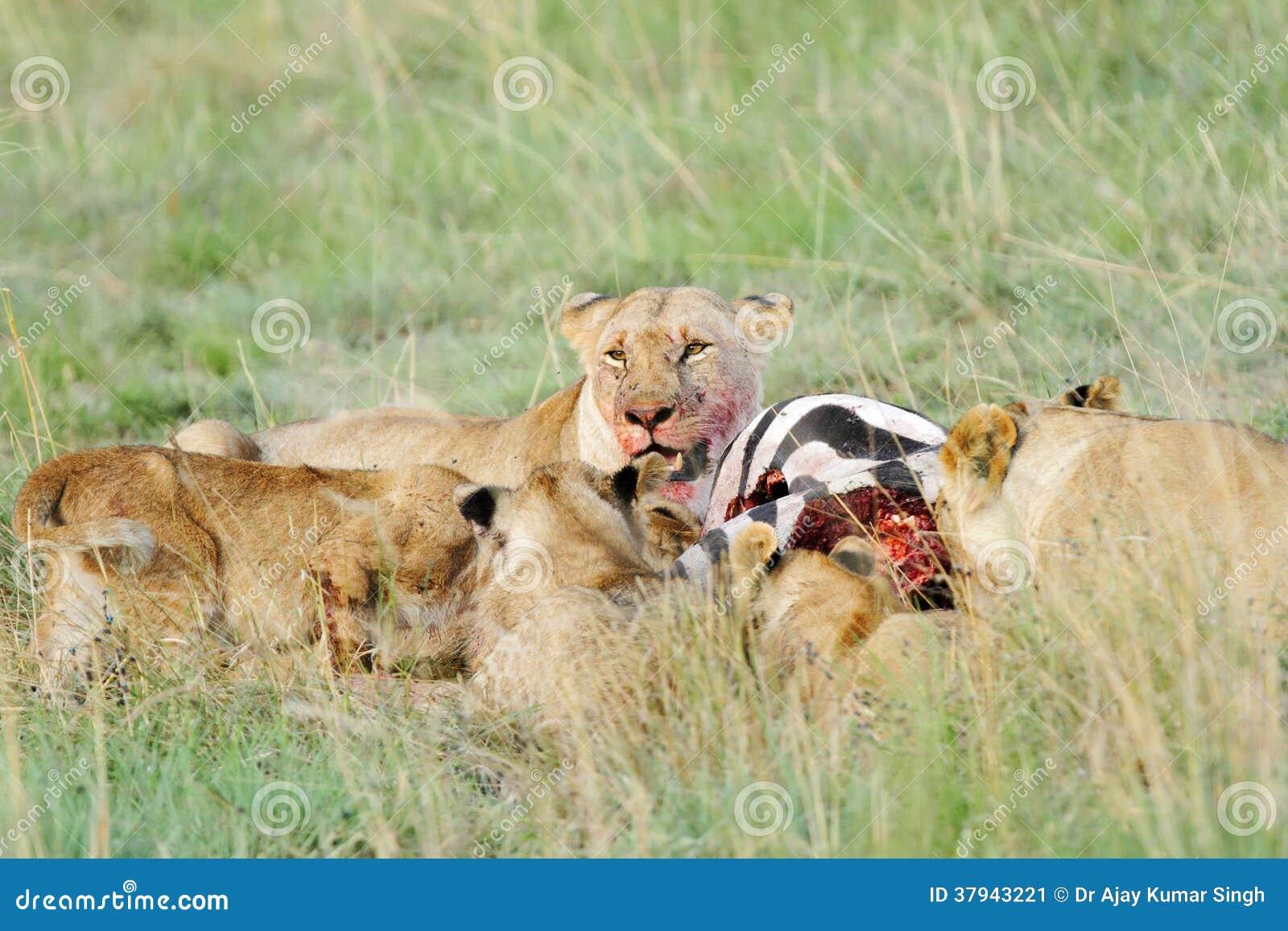All Big Cats In Kenya