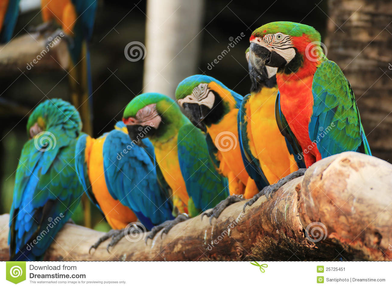 Group of Macaw Birds