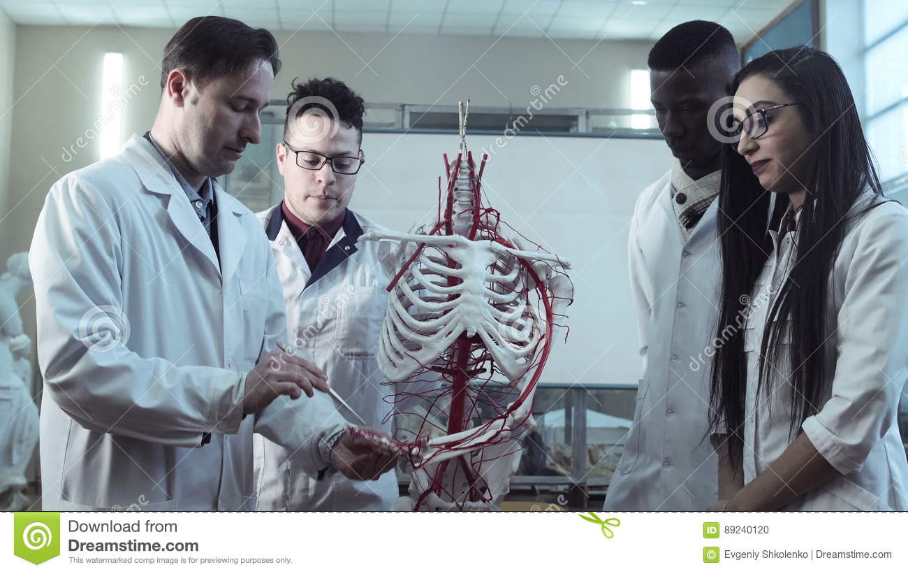 Group Of Medical Students At An Anatomy Lecture Stock Footage