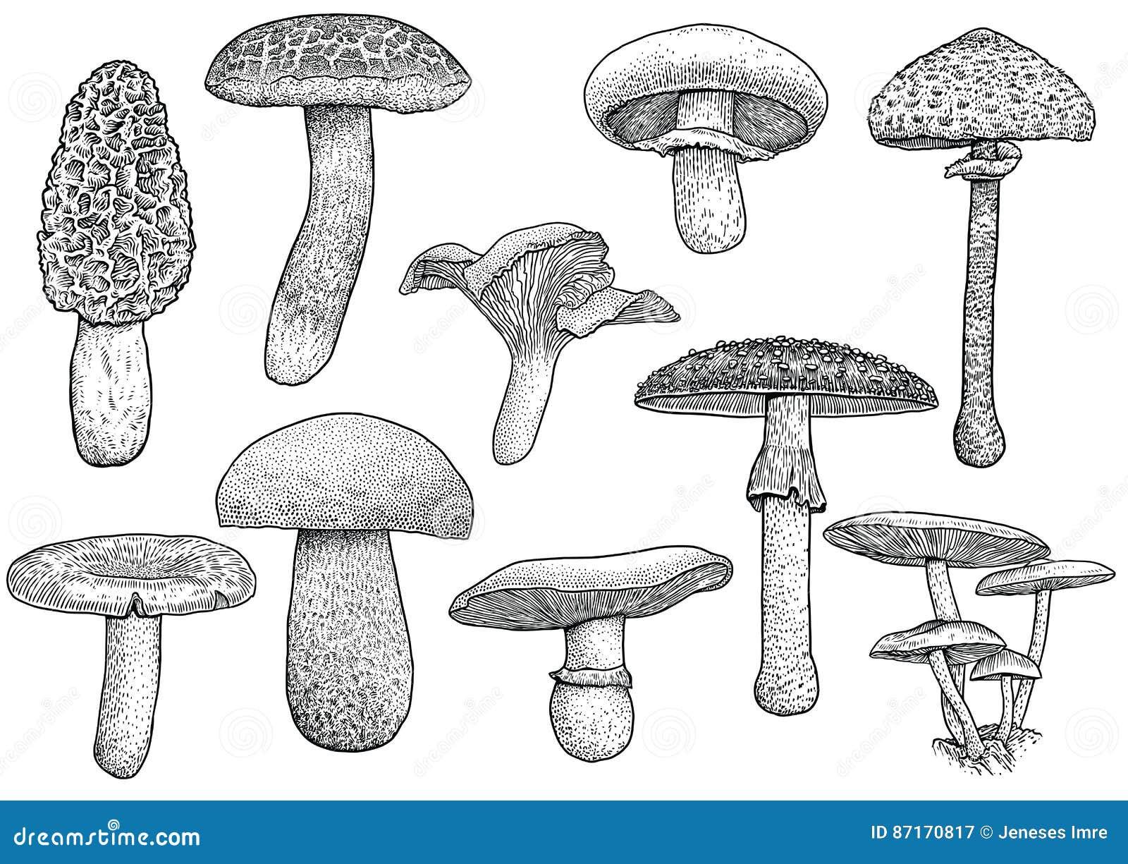 Group Of Mushroom Illustration Drawing Engraving Vector