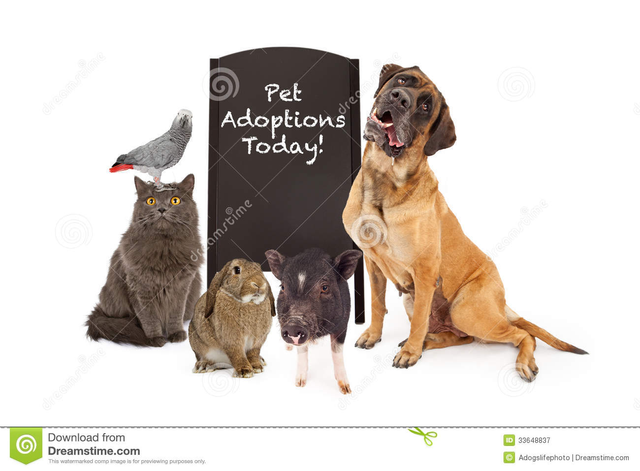 group of pets around adoption event sign royalty free