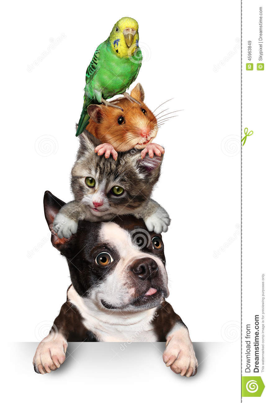 Dog Cats And Hamster