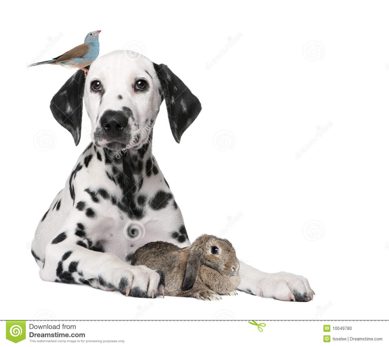 Group of pets : dog puppy, bird, rabbit