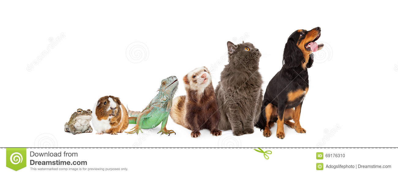 Group Of Pets Looking Up And Side Banner Stock Photo