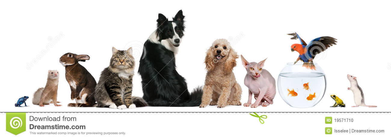group of pets sitting in front of white background stock