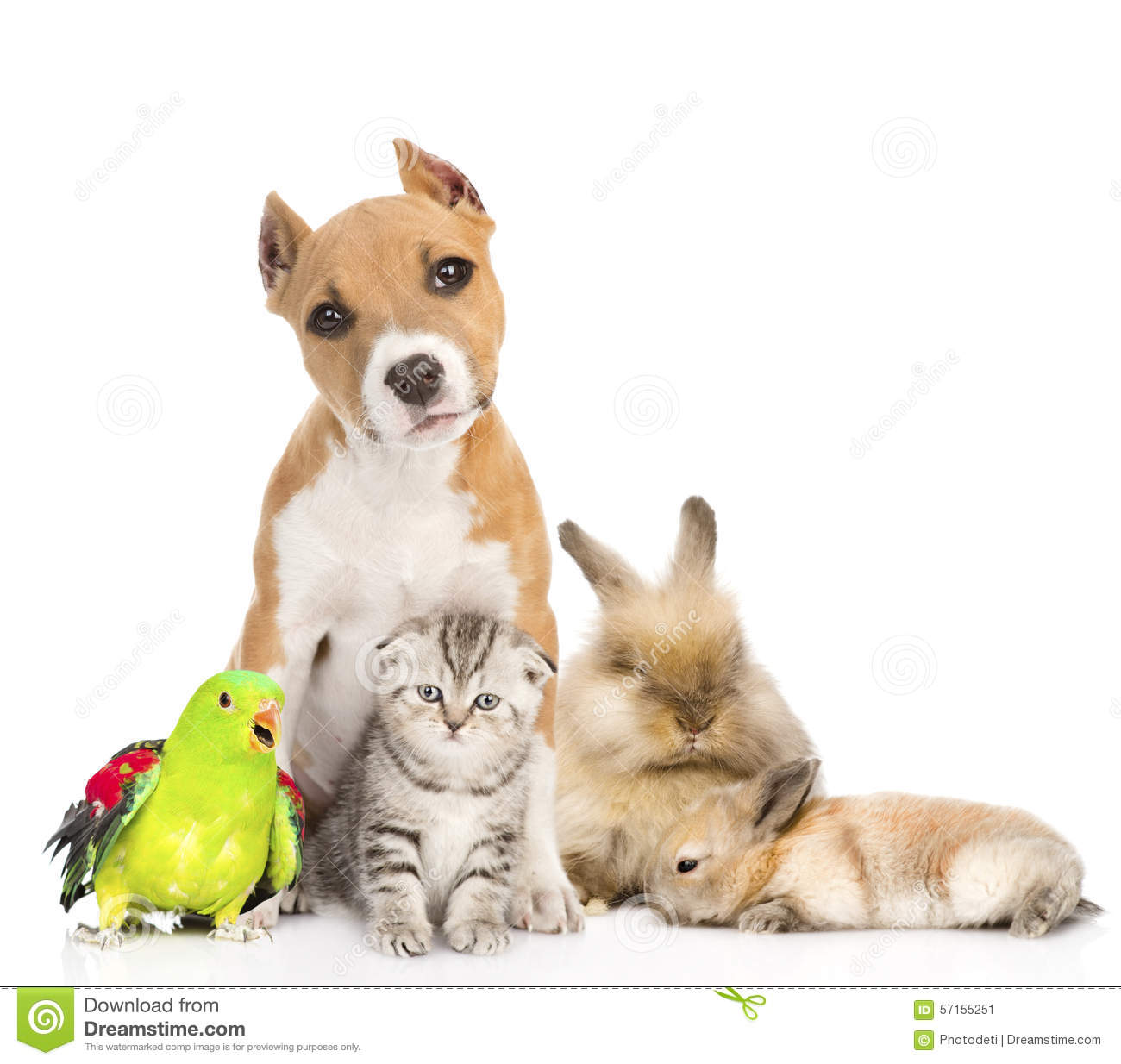 Group Of Pets Together In Front Isolated On White