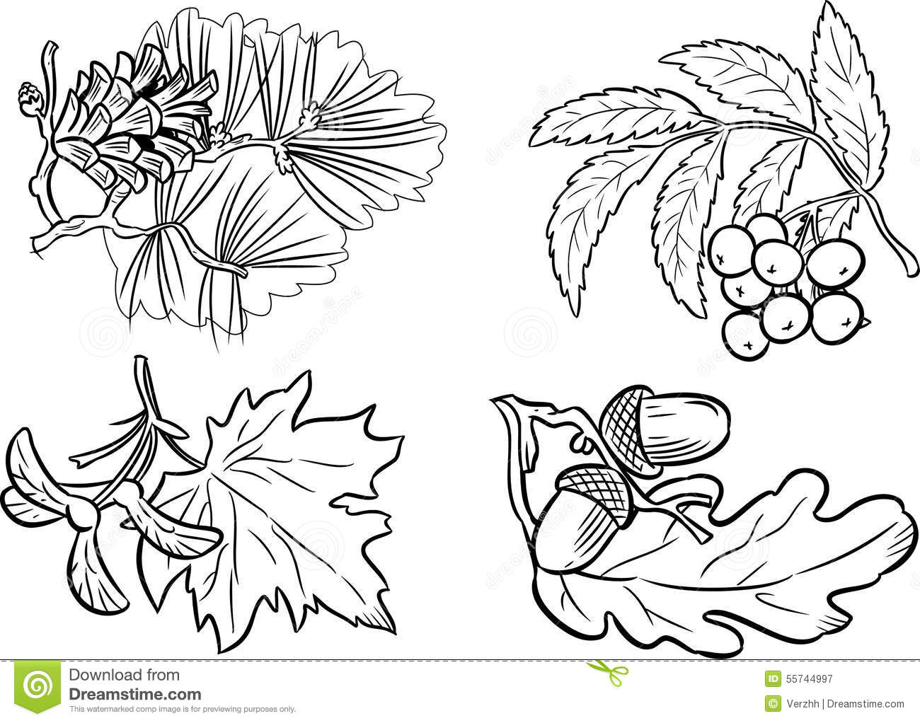 Coloring Pictures Of Diffe Types Leaves Coloring Pages