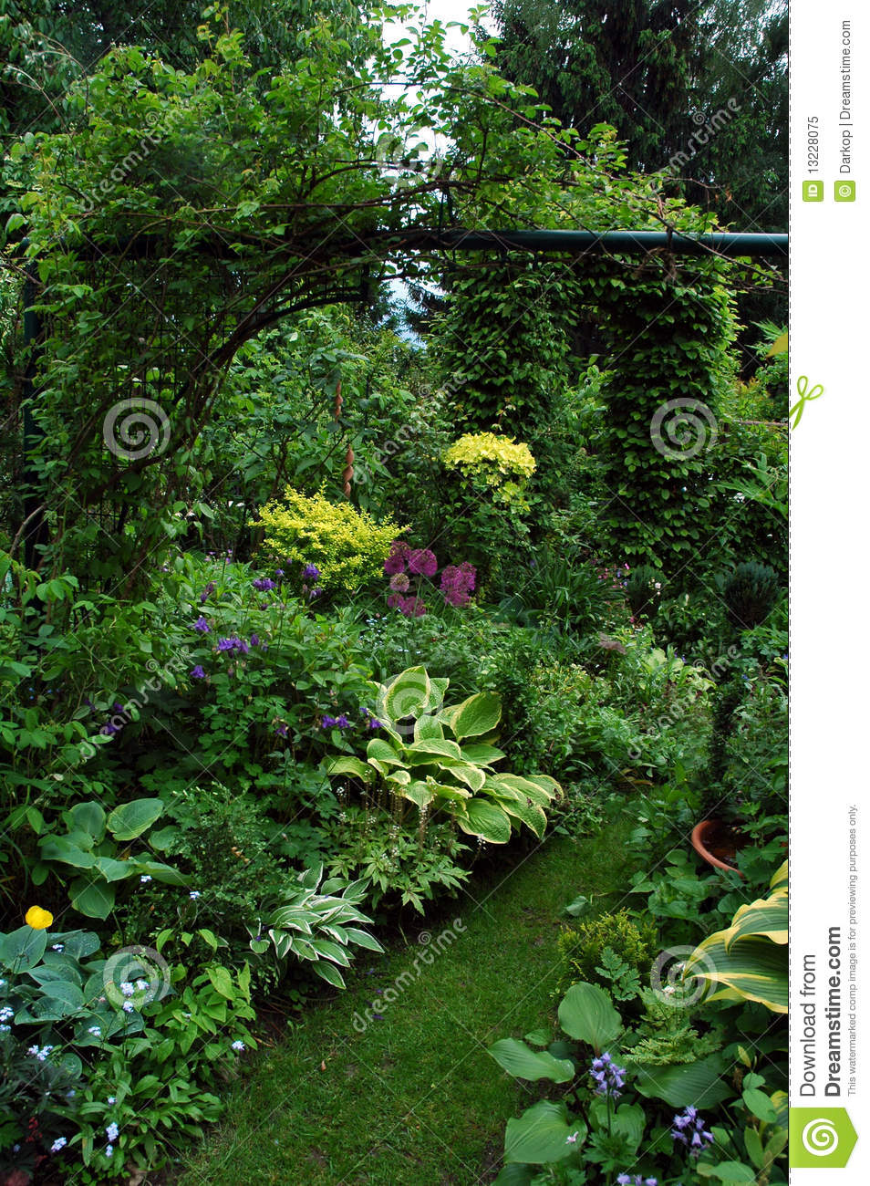 Group Plants In The Shadow Garden Place Royalty Free Stock