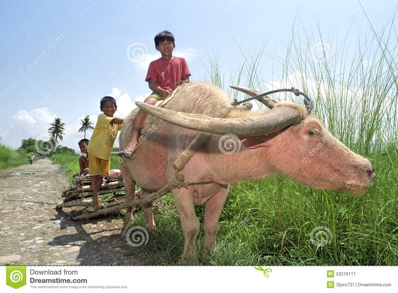 Group portrait of boys riding on a water buffalo