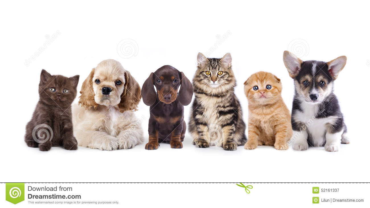 Group Of Puppies And Kitten Stock Image Image Of Childhood