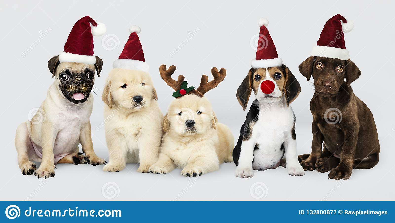 Group Of Puppies Wearing Christmas Hats To Celebrate Christmas Stock