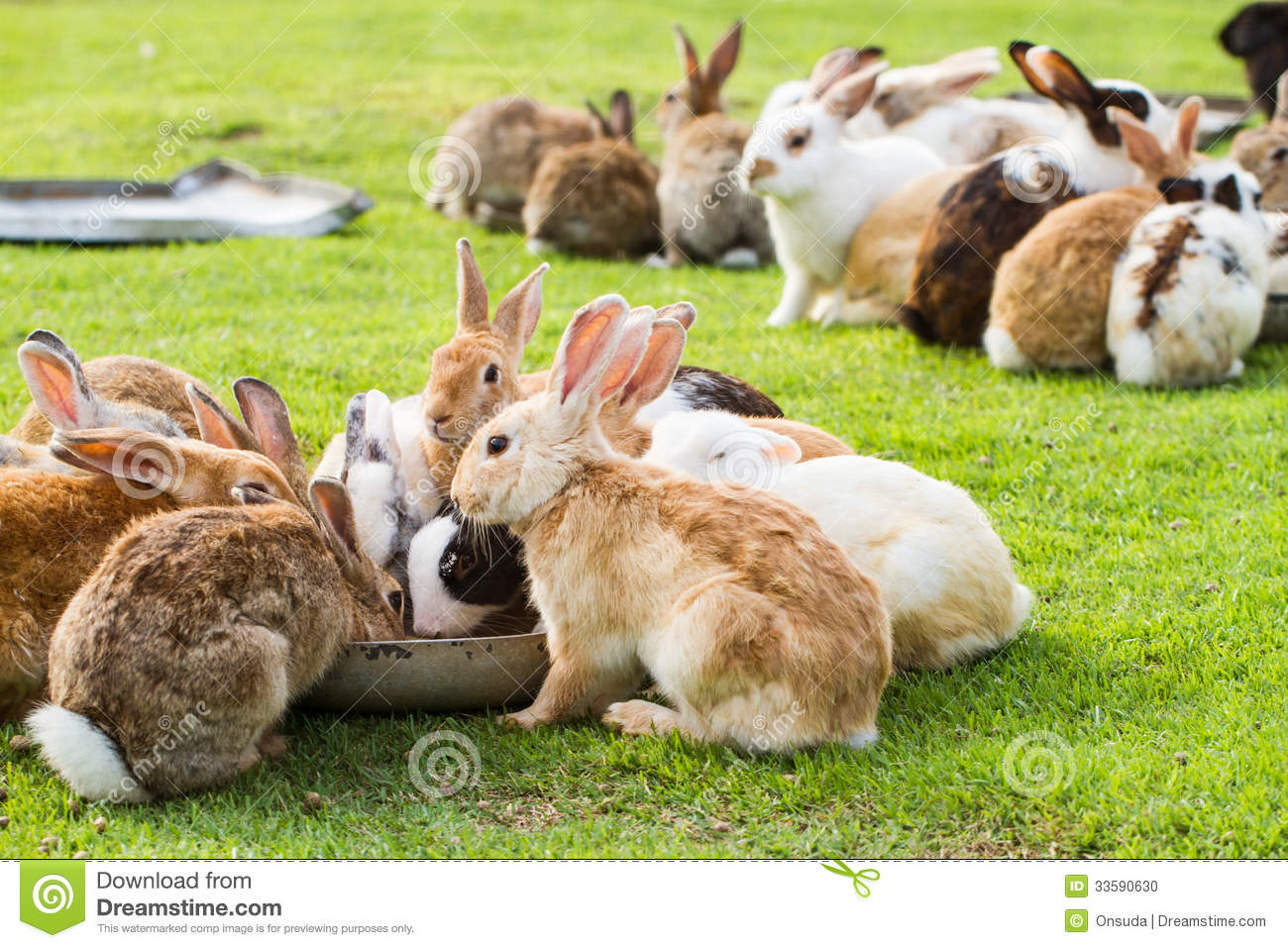 Gardening Group: Group Of Rabbits Stock Photo