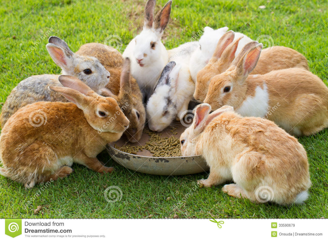 Group Of Bunnies 48
