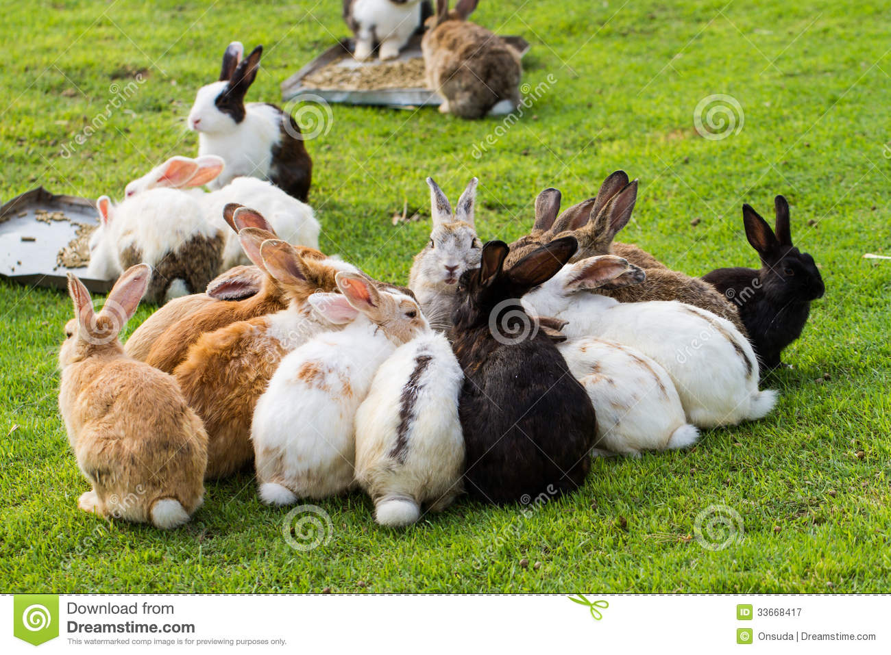 Gardening Group: Group Of Rabbits Royalty Free Stock Photography