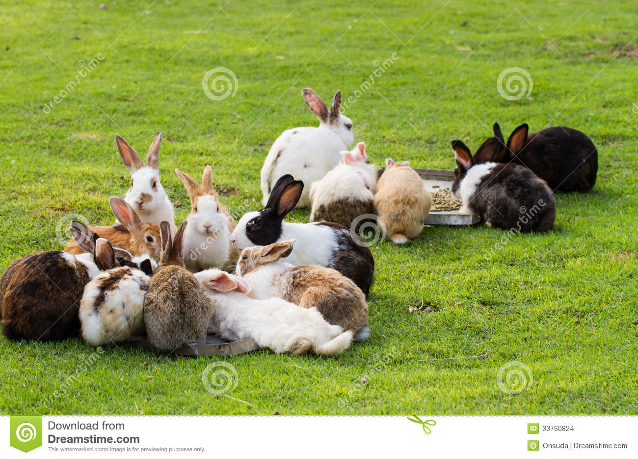 Gardening Group: Group Of Rabbits Stock Images