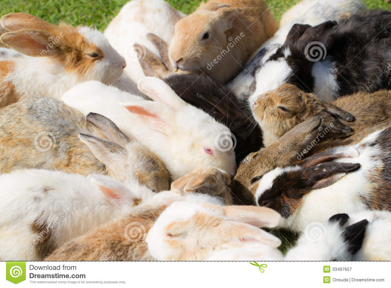 Group Of Rabbits 36