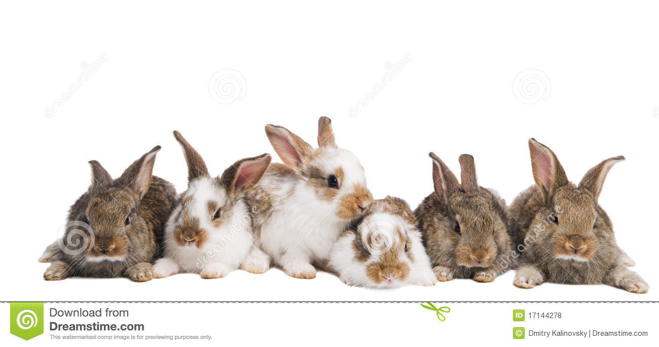 Group Of Rabbits 87