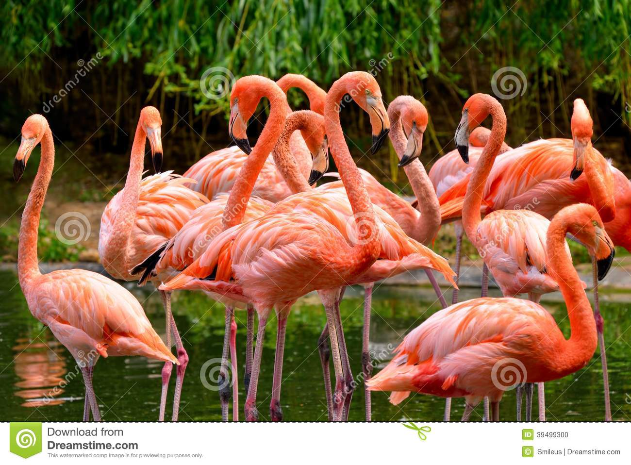 Group Of Flamingos 73